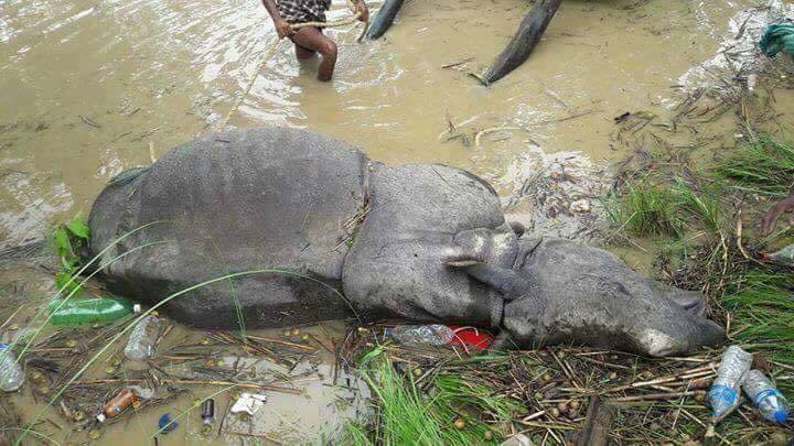 wildlife durin flood in chitwan national park